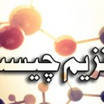 خرید آنزیم | فروش آنزیم | کاربرد آنزیم در بدن انسان